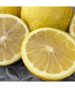 Limoni di Sicilia (Pacco da...